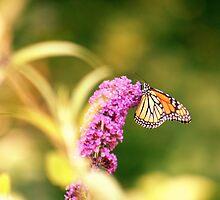 Butterfly Bush - Henniker NH by AngelaMP