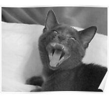 Demonic Kitten!! Poster