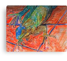 Red Eyed Iguana Canvas Print