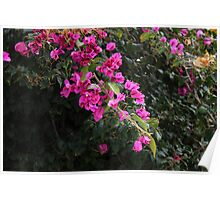 Purple Flowers on a Branch Poster