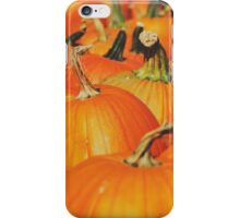 Pumpkin Patch iPhone Case/Skin