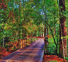 Houston Arboretum  by Savannah Gibbs