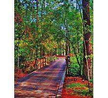 Houston Arboretum  Photographic Print