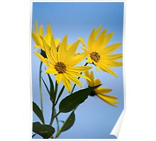 Fall Sunflowers Poster