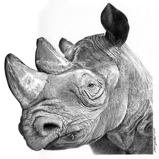 Mzima the rhino by Ronny Hart