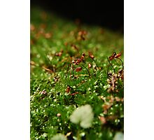 Moss Seedlings Photographic Print