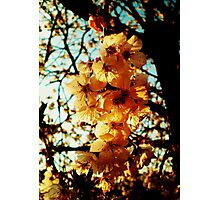 Warmth of Spring Colours Photographic Print