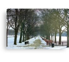 Winter trees in Washington D.C.  Canvas Print