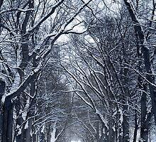 Winter Trees by Alberto  DeJesus