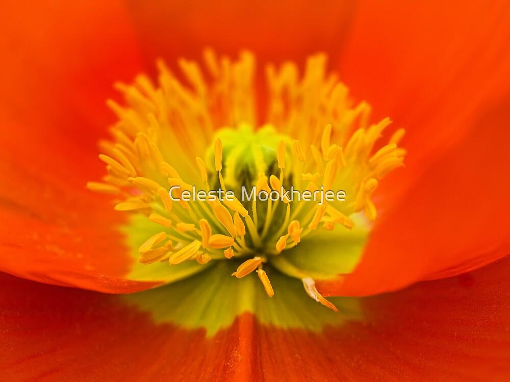 Heart of an orange poppy by Celeste Mookherjee