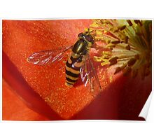 Sipping Nectar..Gathering Pollen Poster
