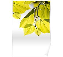 Twig with young green leaves Poster