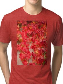Vitaceae red ivy wall abstract Tri-blend T-Shirt