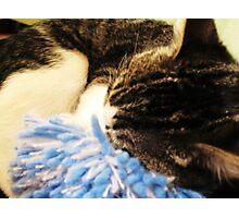 Tired Kitten Photographic Print