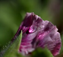 Raindrop by Valerie Henry