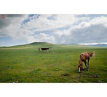 Mongolia Photographic Print