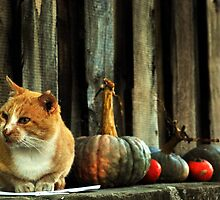 Kit Cat loves Pumpkins by Alessandro Pinto