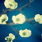 Vintage Spring Flowers Series 1 by Jennifer Westmoreland
