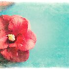 Aged Red Flower on turquoise background by Jennifer Westmoreland