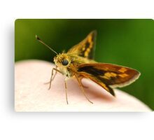 Skipper on my hand Canvas Print