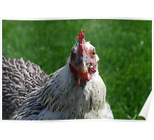 Bantam Chicken Poster