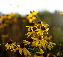 Shinning on the flower by Vats