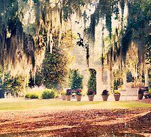 Spanish moss in North Carolina by Jennifer Westmoreland