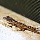 Lizard by ACBPhotos