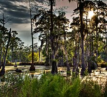 Sam Houston Swamp by RKimages
