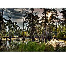 Sam Houston Swamp Photographic Print