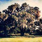 400 year old Oak tree, Wilmington NC by Jennifer Westmoreland