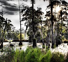 Sam Houston Swamp-2 by RKimages