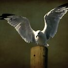 Gull by Michael  Herrfurth