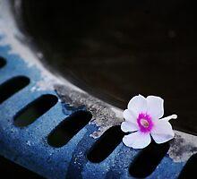 Fallen Bloom  by Laurie Minor