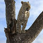 Up A Tree by Michael  Moss