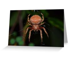 Red Orb Weaver Greeting Card