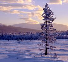Landscape in winter by Ingvar Bjork Photography