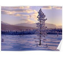 Landscape in winter Poster