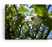 Hidcot Gardens, National Trust Property Canvas Print