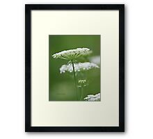 Flower Stack - Queen Anne's Lace Framed Print