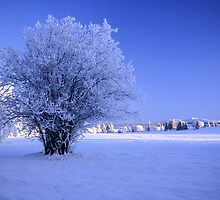 Winter landscape by Ingvar Bjork Photography