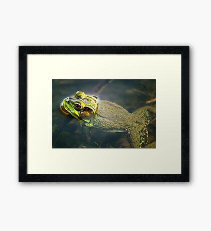 Frog in Water Framed Print