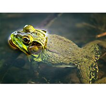 Frog in Water Photographic Print