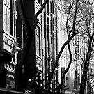 cityscapes #248, winter trees by stickelsimages