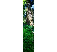 Slice of Life (vertical panorama) Photographic Print