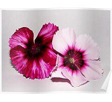 Flower Power - White Backdrop  Poster
