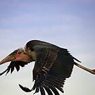 maribou stork by gruntpig