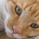 cat called Flame by footsiephoto