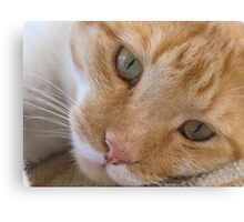 cat called Flame Canvas Print