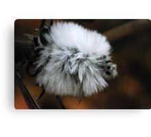 fluffy wild flower macro Canvas Print